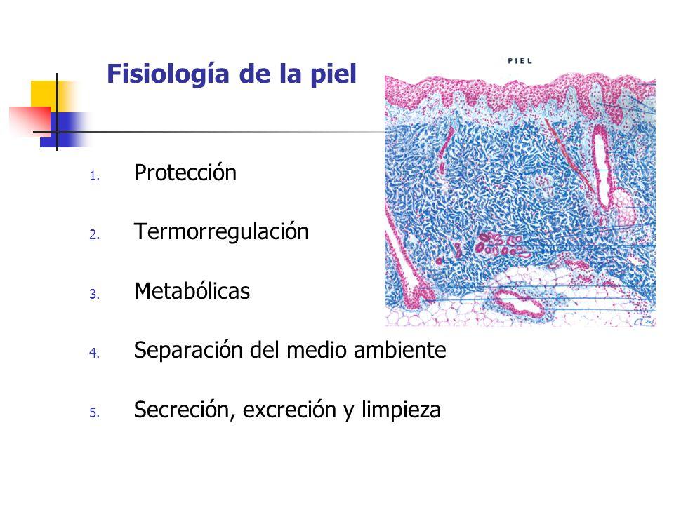 Fisiología de la piel Protección Termorregulación Metabólicas