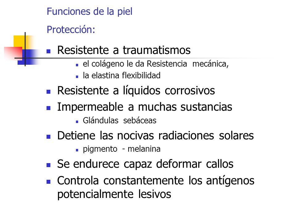 Funciones de la piel Protección: