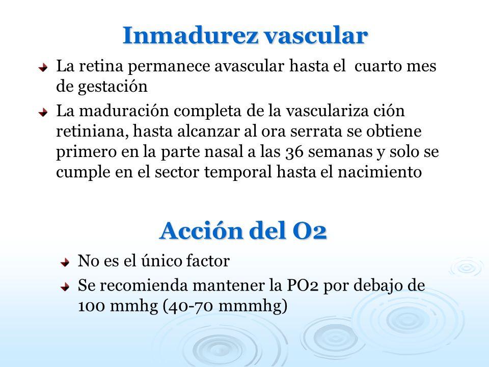 Inmadurez vascular Acción del O2