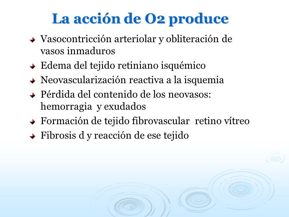 La acción de O2 produce Vasocontricción arteriolar y obliteración de vasos inmaduros. Edema del tejido retiniano isquémico.
