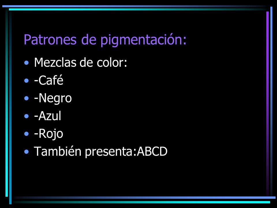 Patrones de pigmentación: