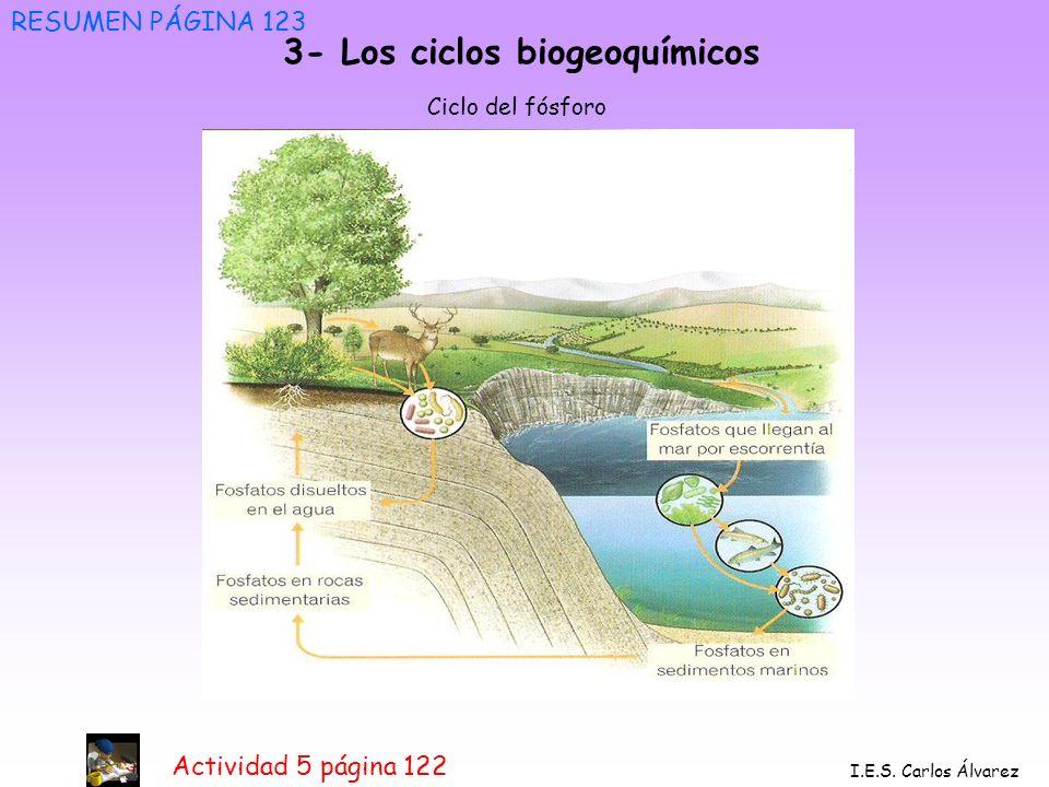 3- Los ciclos biogeoquímicos