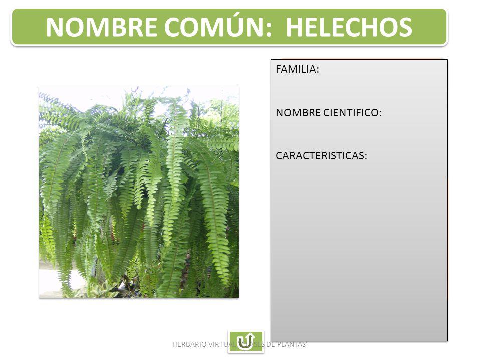 Auxiliar de enfermeria ppt descargar for Plantas ornamentales helechos
