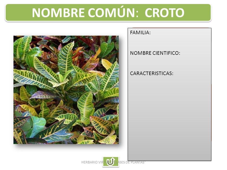 Auxiliar de enfermeria ppt descargar for Plantas ornamentales croto