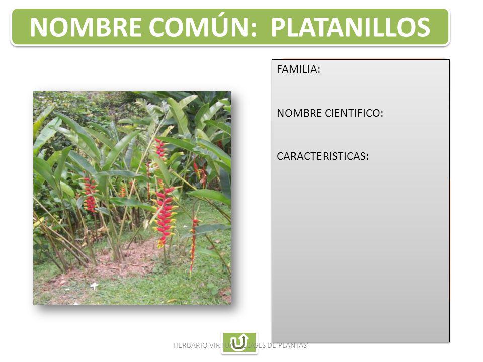 Auxiliar de enfermeria ppt descargar for Planta ornamental helecho nombre cientifico