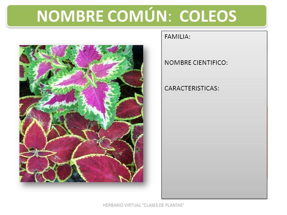 Planta ornamental nombre cientifico rose planta plantas for Clases de plantas ornamentales
