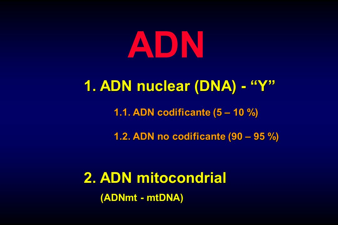 ADN 1. ADN nuclear (DNA) - Y 2. ADN mitocondrial (ADNmt - mtDNA)