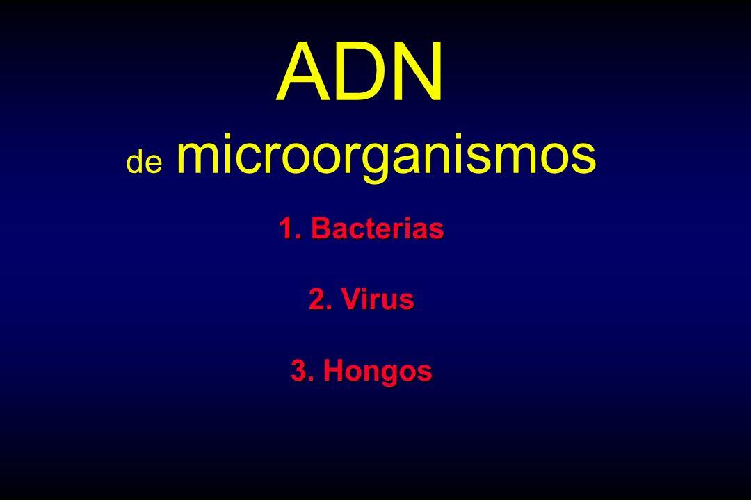 ADN de microorganismos