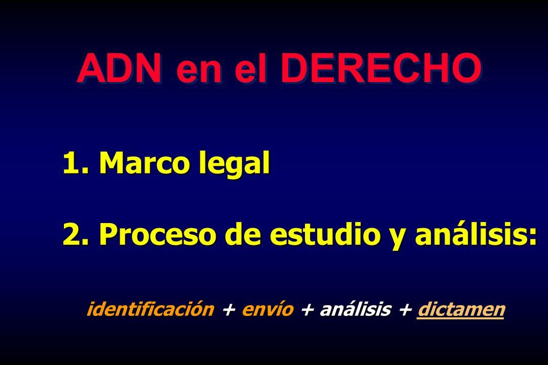 ADN en el DERECHO Marco legal 2. Proceso de estudio y análisis: