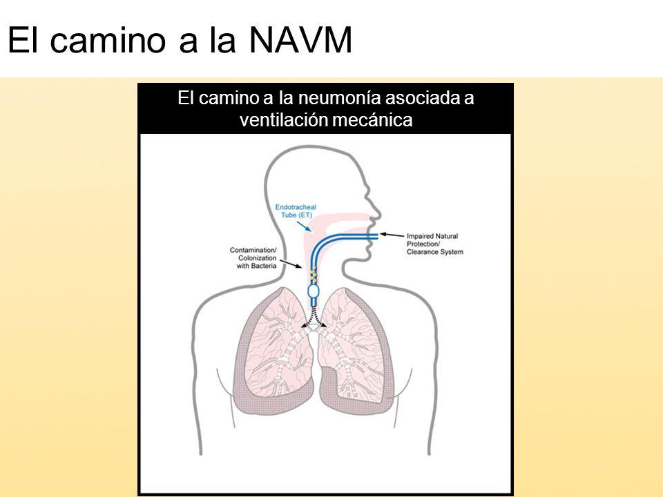 El camino a la neumonía asociada a ventilación mecánica