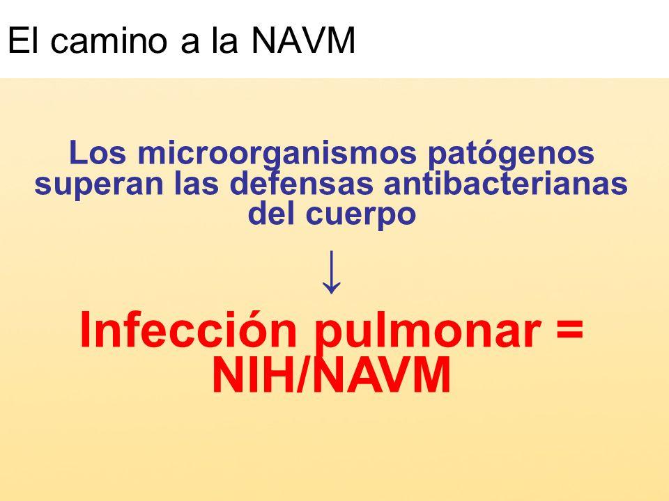 Infección pulmonar = NIH/NAVM