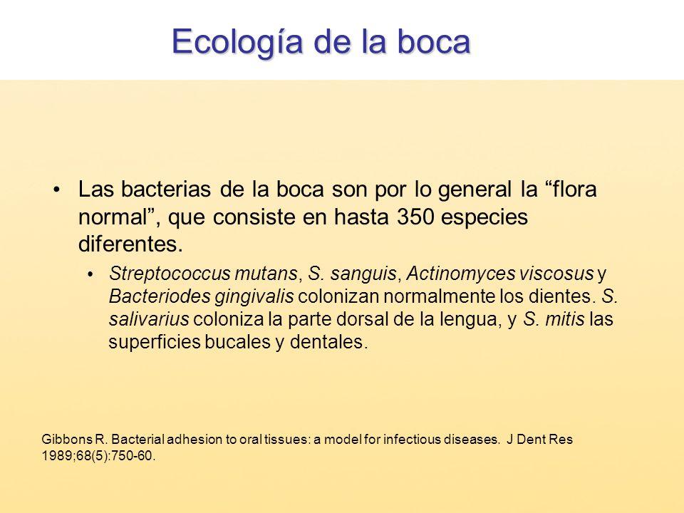 Ecología de la bocaLas bacterias de la boca son por lo general la flora normal , que consiste en hasta 350 especies diferentes.