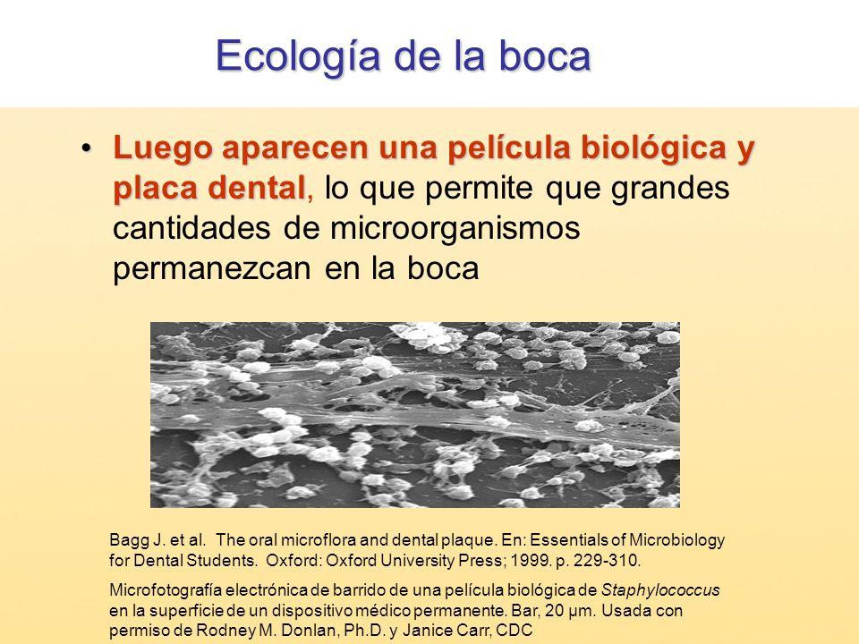 Ecología de la boca