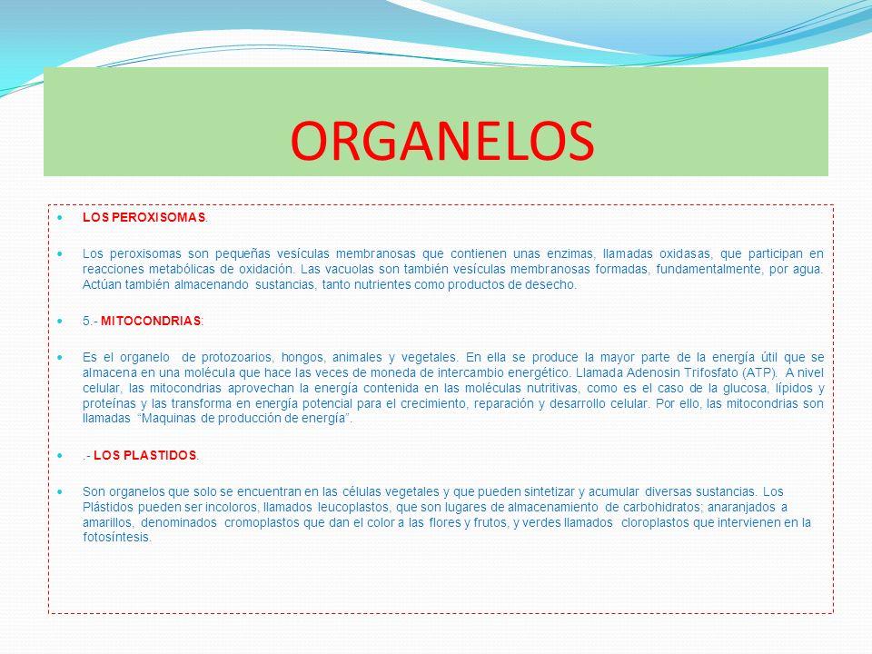 ORGANELOS LOS PEROXISOMAS.