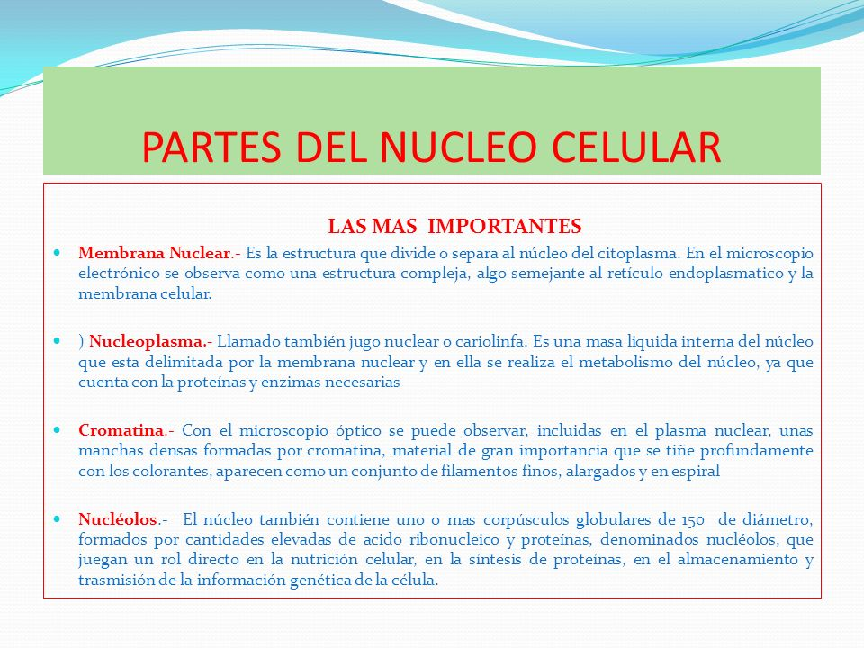 PARTES DEL NUCLEO CELULAR