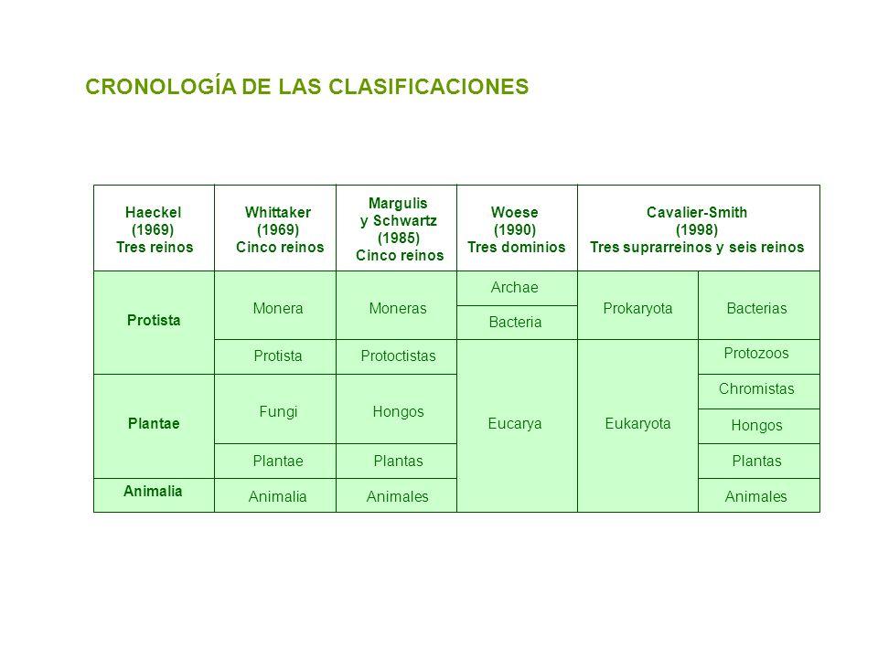 CRONOLOGÍA DE LAS CLASIFICACIONES