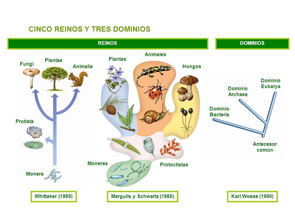 CINCO REINOS Y TRES DOMINIOS
