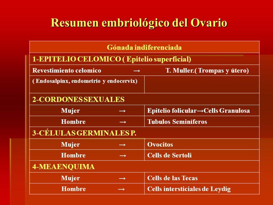 Resumen embriológico del Ovario
