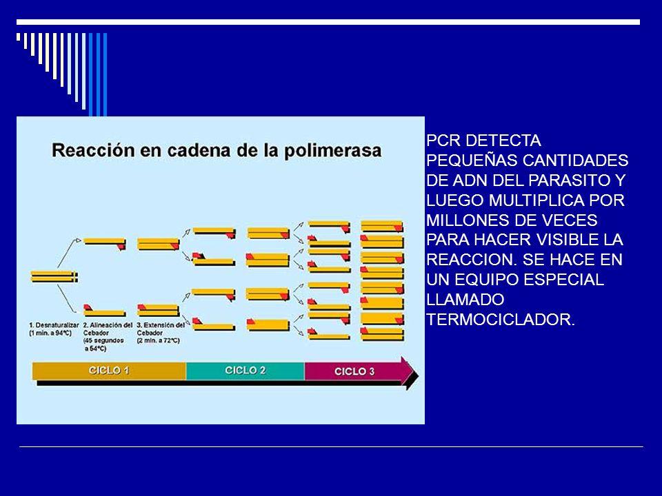 PCR DETECTA PEQUEÑAS CANTIDADES DE ADN DEL PARASITO Y LUEGO MULTIPLICA POR MILLONES DE VECES PARA HACER VISIBLE LA REACCION.