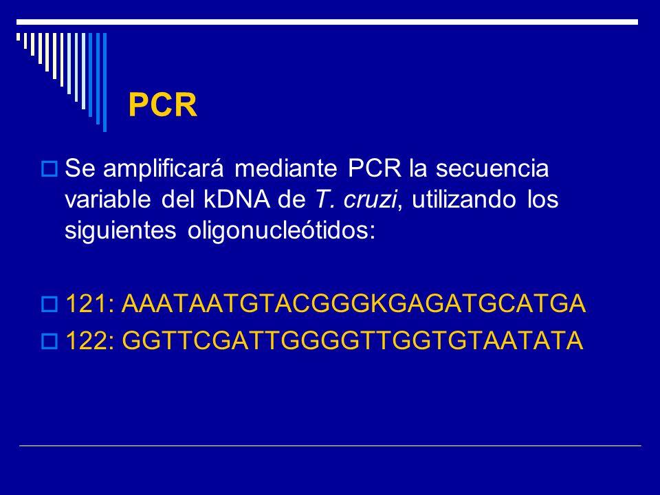 PCR Se amplificará mediante PCR la secuencia variable del kDNA de T. cruzi, utilizando los siguientes oligonucleótidos: