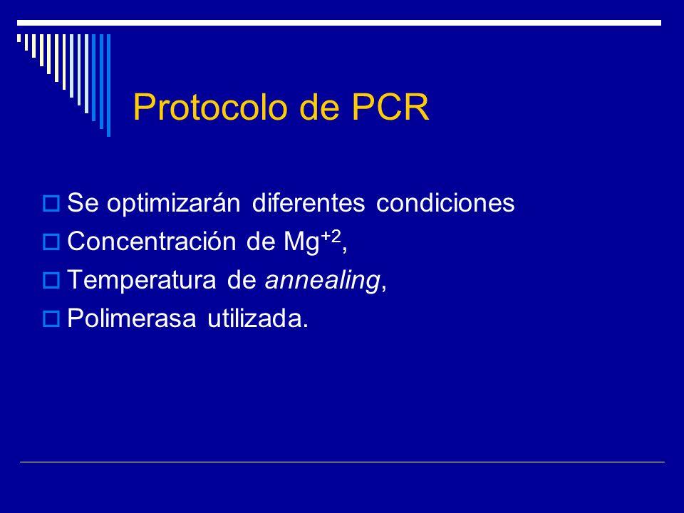 Protocolo de PCR Se optimizarán diferentes condiciones