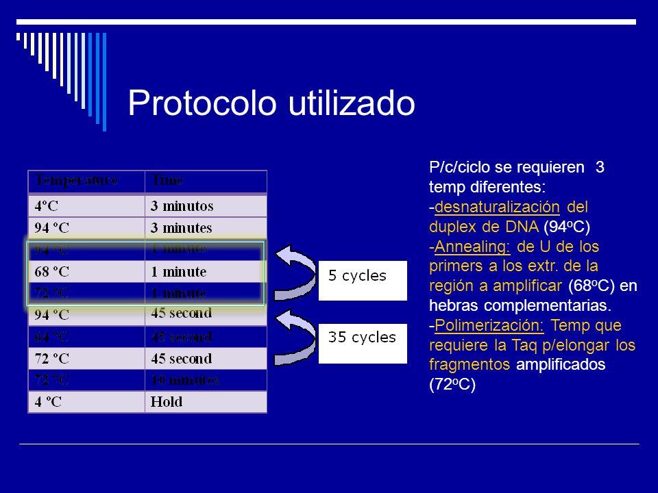 Protocolo utilizado P/c/ciclo se requieren 3 temp diferentes: