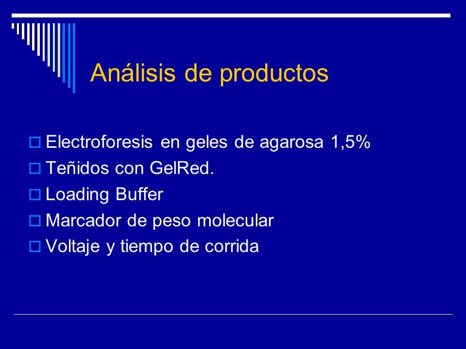 Análisis de productos Electroforesis en geles de agarosa 1,5%