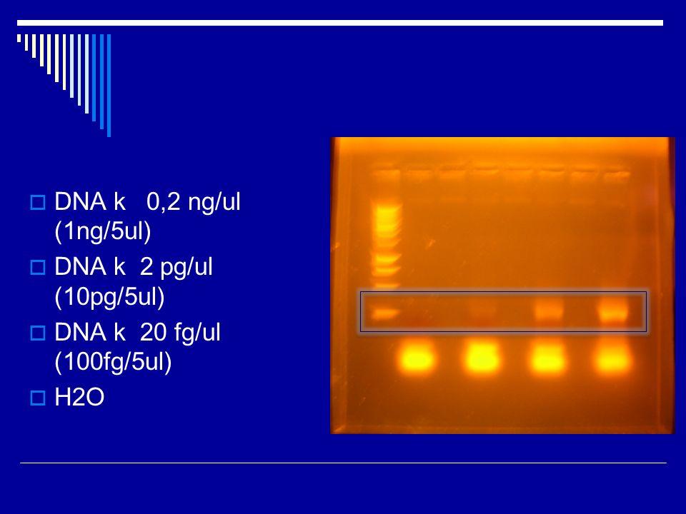 DNA k 0,2 ng/ul (1ng/5ul) DNA k 2 pg/ul (10pg/5ul) DNA k 20 fg/ul (100fg/5ul) H2O