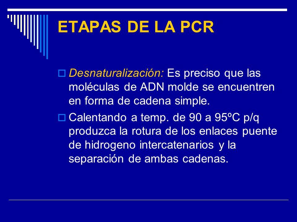 ETAPAS DE LA PCR Desnaturalización: Es preciso que las moléculas de ADN molde se encuentren en forma de cadena simple.
