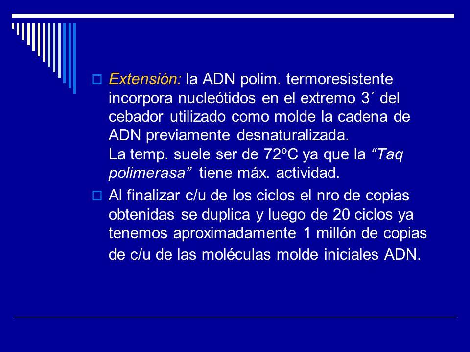 Extensión: la ADN polim