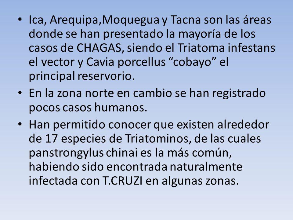 Ica, Arequipa,Moquegua y Tacna son las áreas donde se han presentado la mayoría de los casos de CHAGAS, siendo el Triatoma infestans el vector y Cavia porcellus cobayo el principal reservorio.