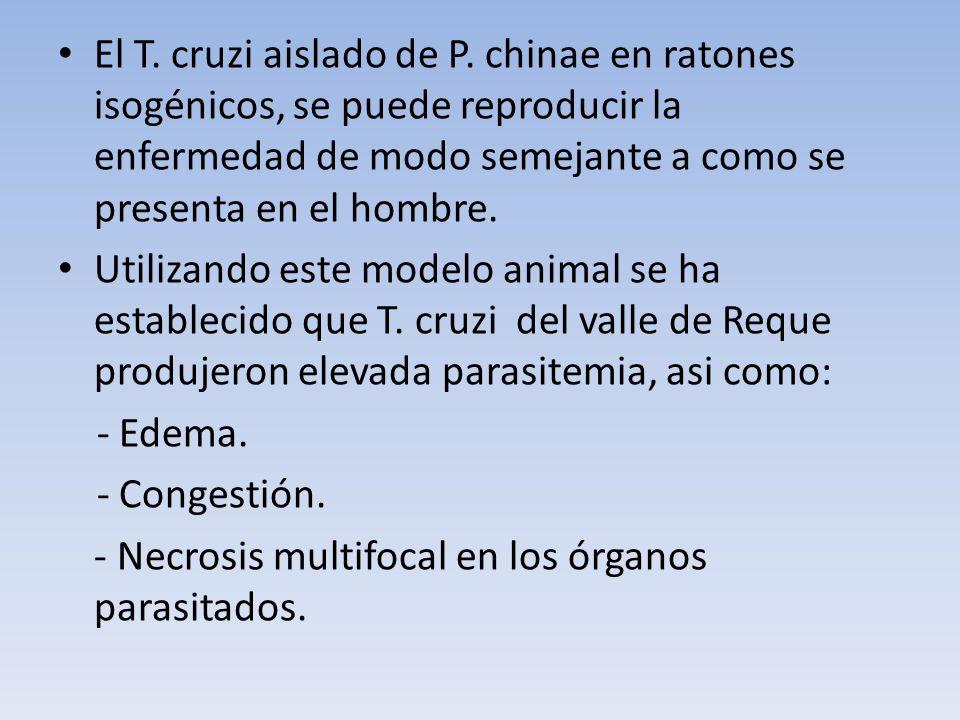 El T. cruzi aislado de P. chinae en ratones isogénicos, se puede reproducir la enfermedad de modo semejante a como se presenta en el hombre.