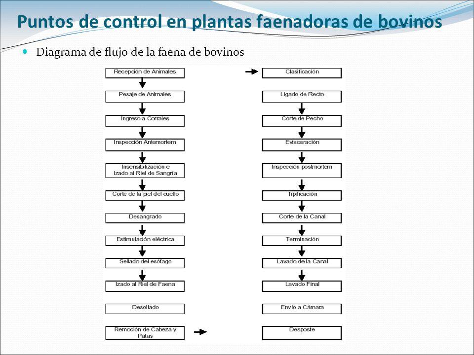 Puntos de control en plantas faenadoras de bovinos