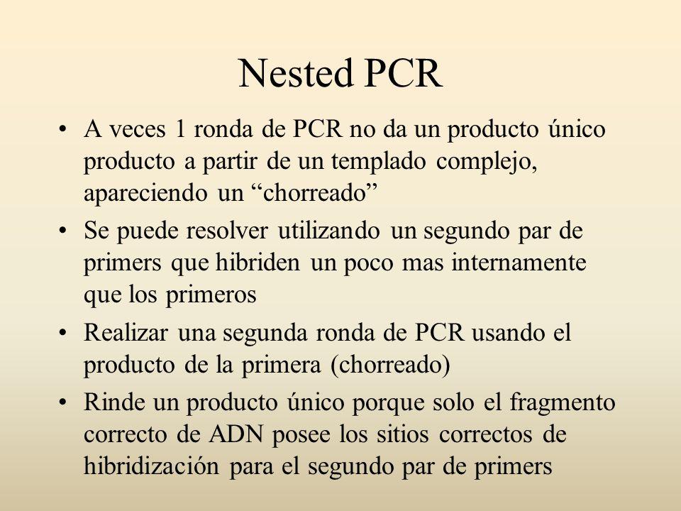 Nested PCR A veces 1 ronda de PCR no da un producto único producto a partir de un templado complejo, apareciendo un chorreado