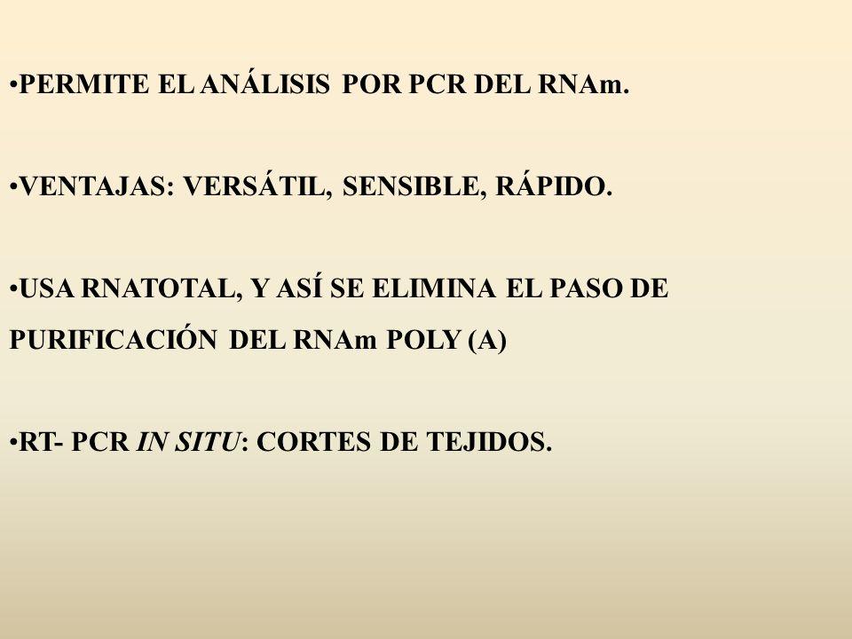 PERMITE EL ANÁLISIS POR PCR DEL RNAm.