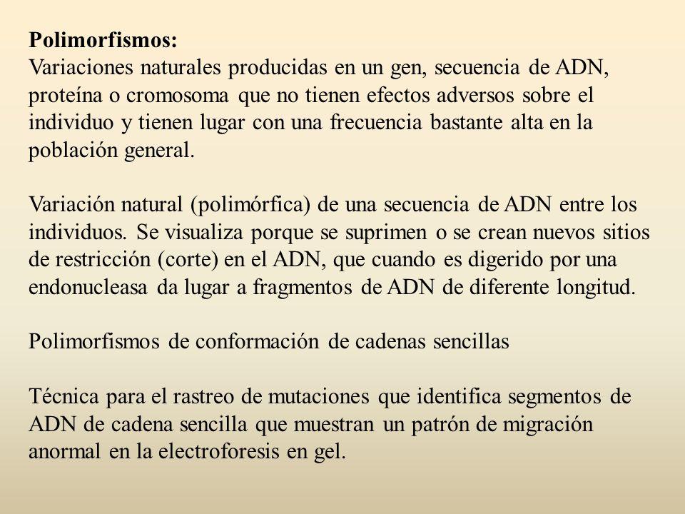 Polimorfismos: