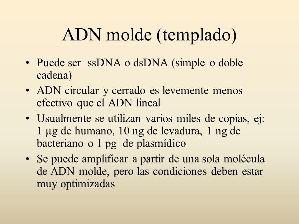 ADN molde (templado) Puede ser ssDNA o dsDNA (simple o doble cadena)