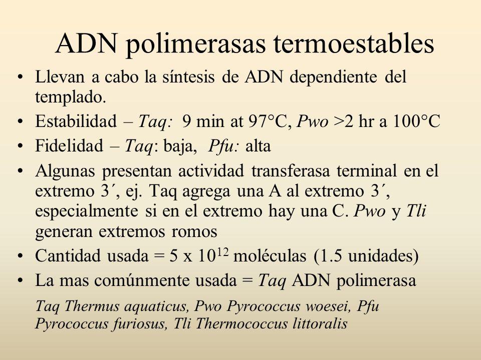 ADN polimerasas termoestables