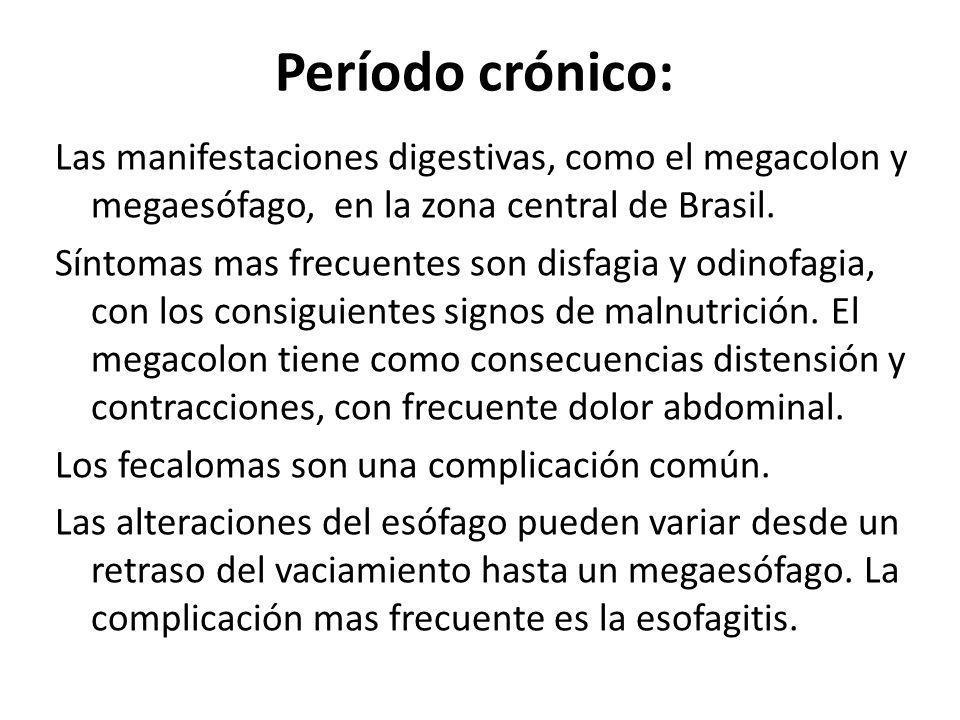 Período crónico: Las manifestaciones digestivas, como el megacolon y megaesófago, en la zona central de Brasil.
