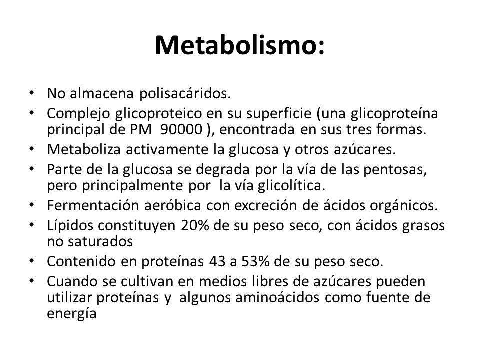 Metabolismo: No almacena polisacáridos.