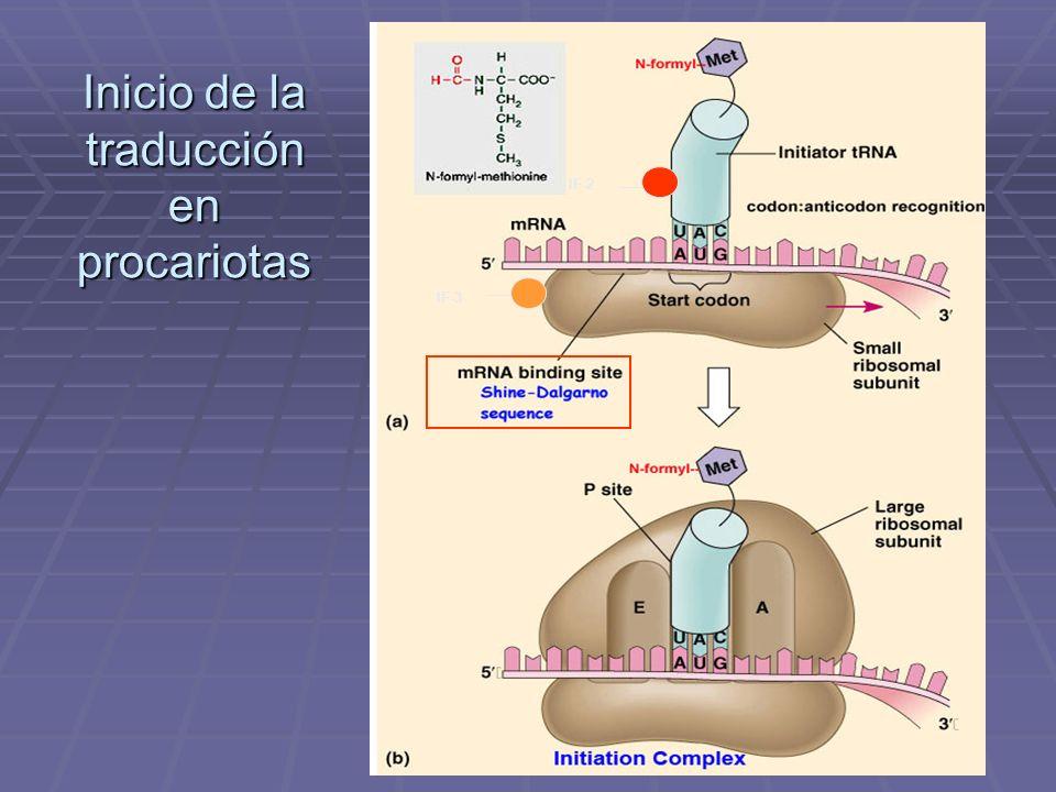 Inicio de la traducción en procariotas