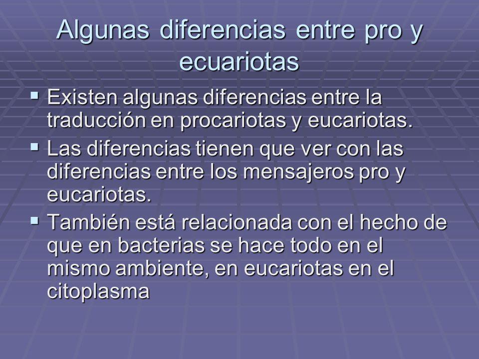 Algunas diferencias entre pro y ecuariotas