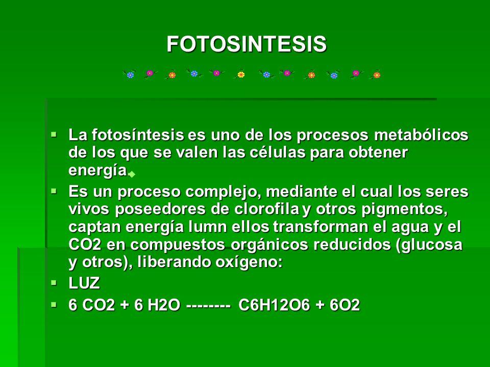 FOTOSINTESISLa fotosíntesis es uno de los procesos metabólicos de los que se valen las células para obtener energía.