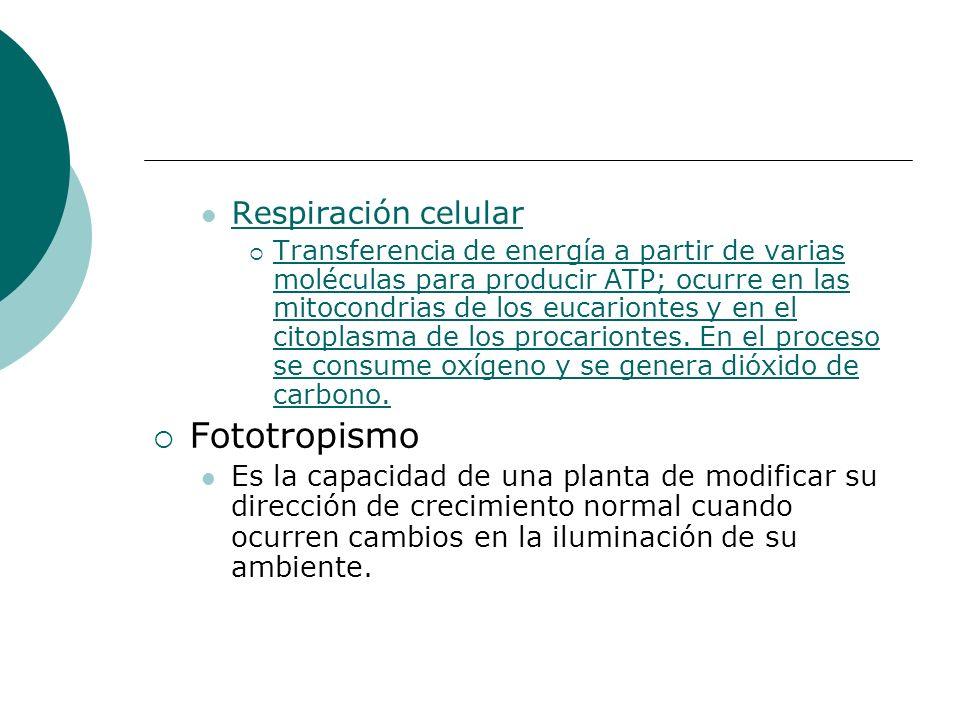 Fototropismo Respiración celular