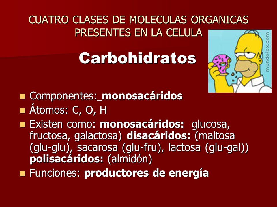 CUATRO CLASES DE MOLECULAS ORGANICAS PRESENTES EN LA CELULA