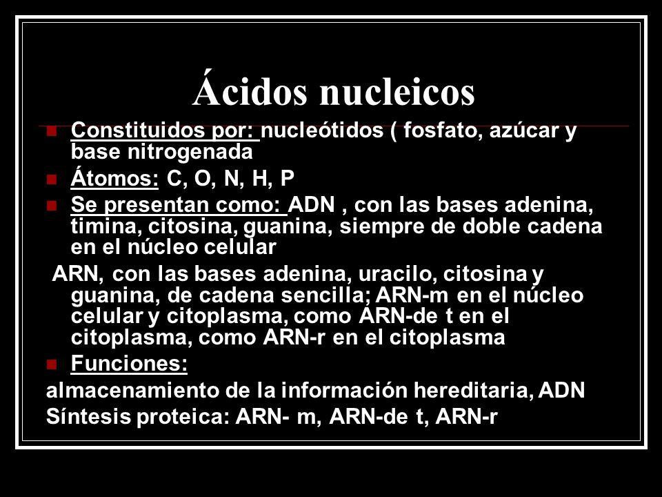 Ácidos nucleicos Constituidos por: nucleótidos ( fosfato, azúcar y base nitrogenada. Átomos: C, O, N, H, P.