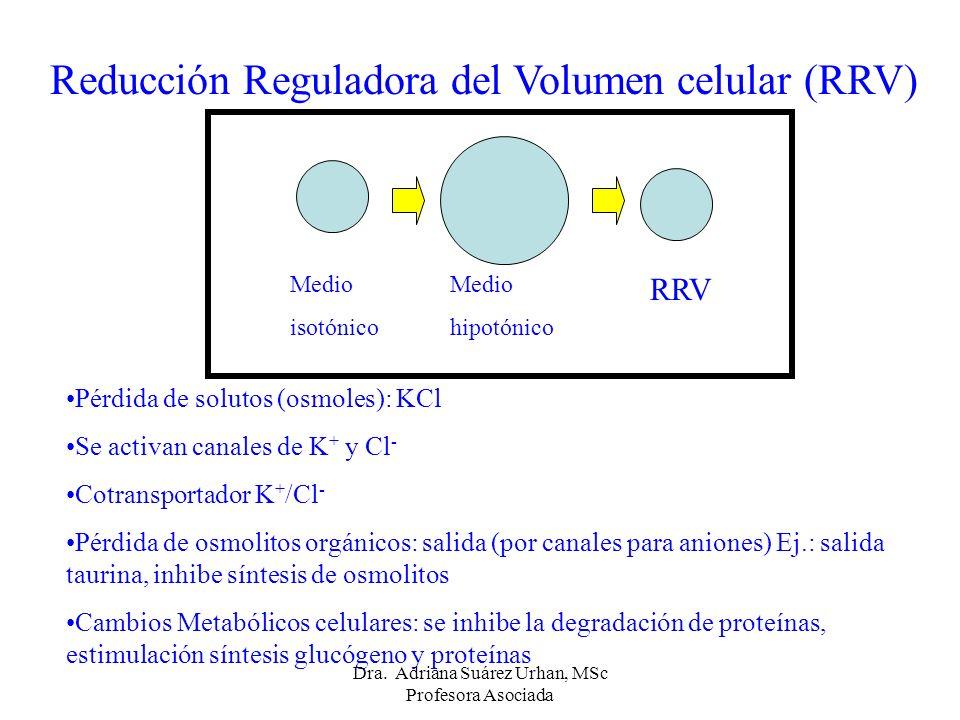 Reducción Reguladora del Volumen celular (RRV)