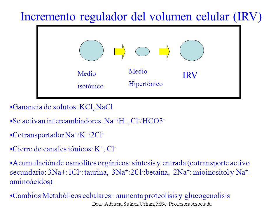 Incremento regulador del volumen celular (IRV)