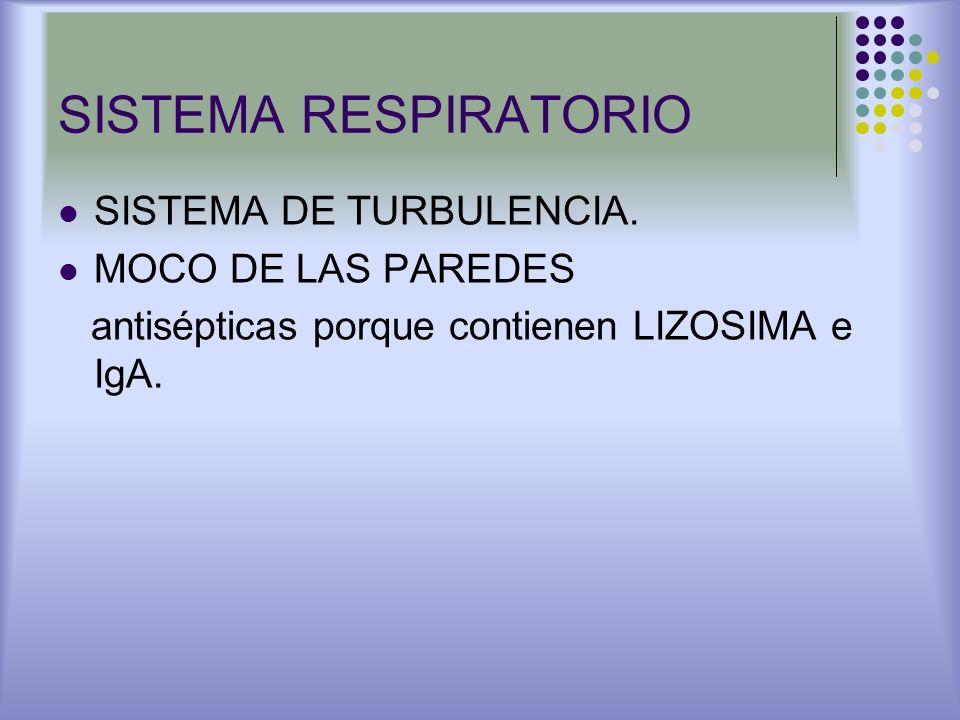 SISTEMA RESPIRATORIO SISTEMA DE TURBULENCIA. MOCO DE LAS PAREDES