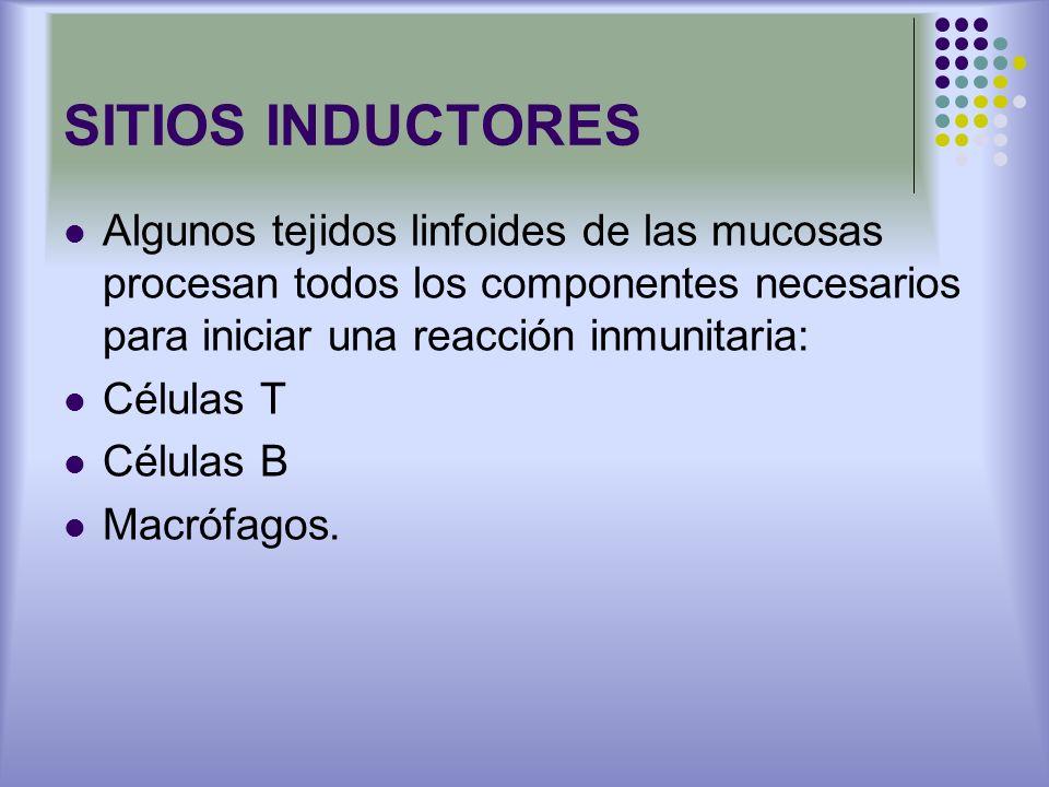 SITIOS INDUCTORES Algunos tejidos linfoides de las mucosas procesan todos los componentes necesarios para iniciar una reacción inmunitaria: